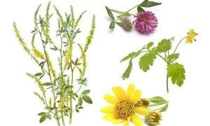 Противотромбозные препараты и разжижающие кровь от тромбов травы