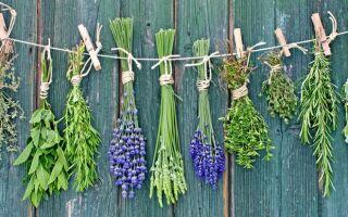 Какие кровоостанавливающие травы при маточных кровотечениях эффективны