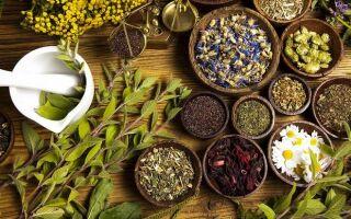 Какие лекарственные травы используют в лечении варикоза