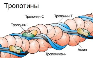 Нормы тропонина в анализе крови