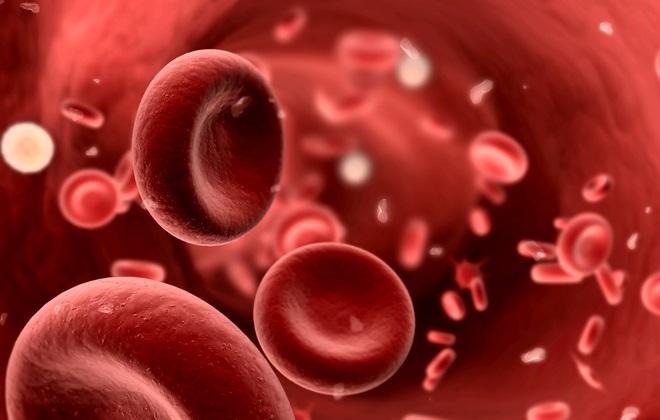 Белые тельца в составе крови человека