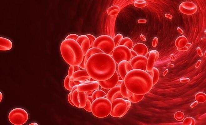 Кровеносная система человека изнутри