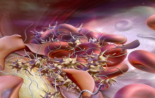 Переплетение клеток крови