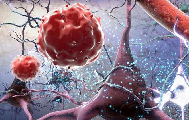 В составе крови имеется клетка белка
