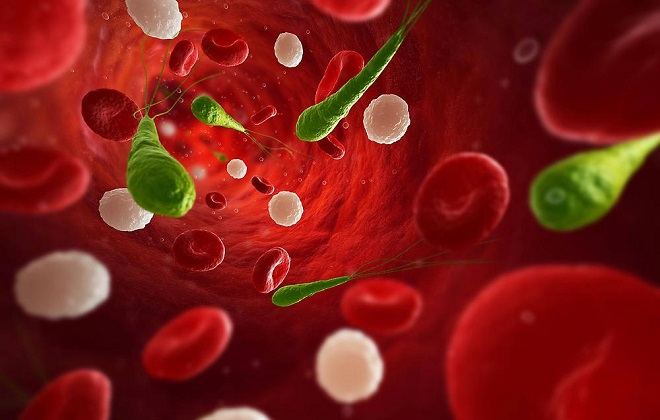 Все составляющие плазмы крови