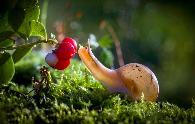 Брусника как много витаминный продукт растительного происхождения
