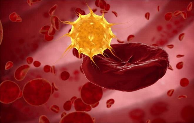 Клетка холестерина в связке с эритроцитарными