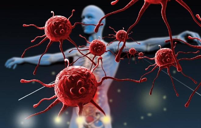 Красные кровяные тельца в органах человека