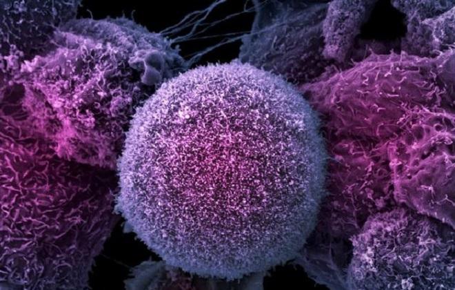 Пониженное содержание лимфоцитов в крови у ребенка