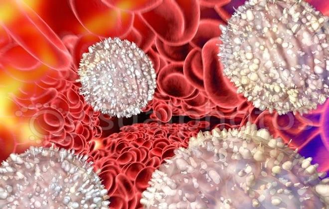 Ярко выраженные белые клетки крови