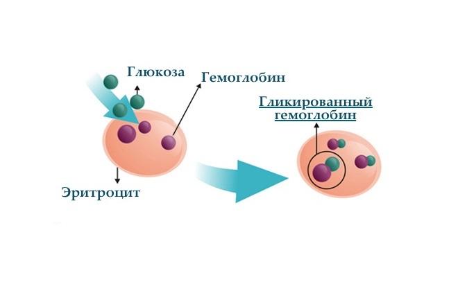 Что означает гликозилированный гемоглобин? для чего сдавать анализ?