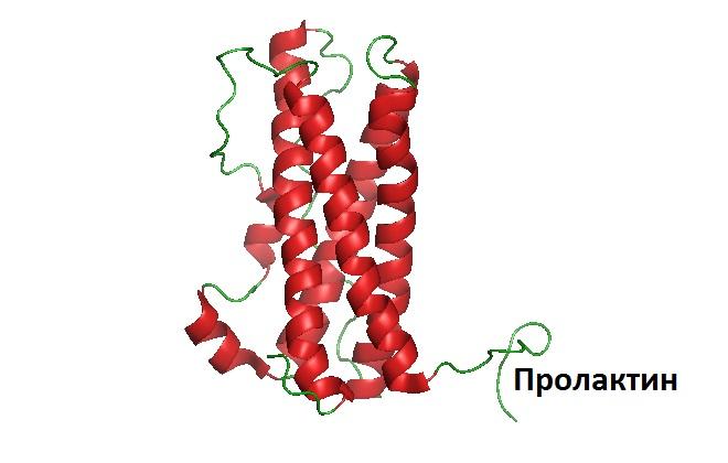 Семейство пролактинподобных белков