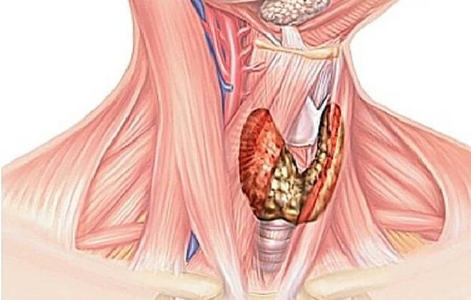 Единые правила сдачи анализов крови на гормоны щитовидной железы