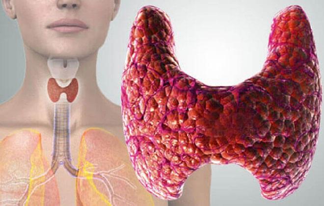 Где вырабатывается тиреотропный гормон в организме человек