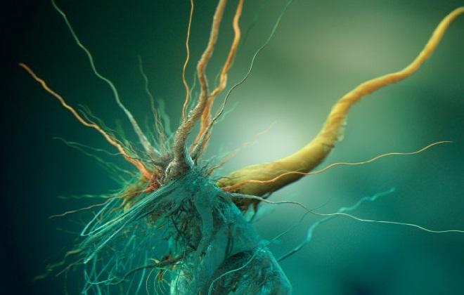 Научное определение заболевания