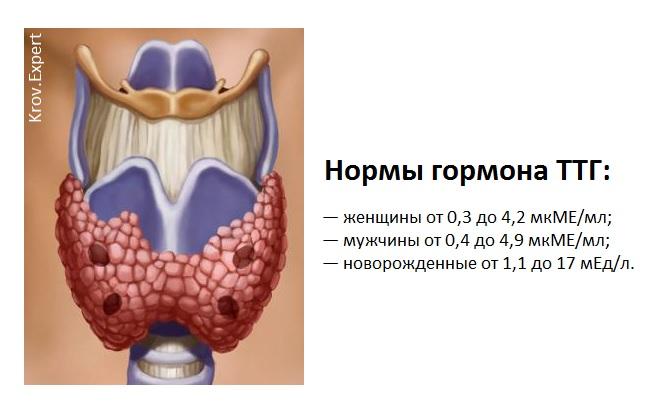 Нормальные значения которые должны быть в анализе на гормоны