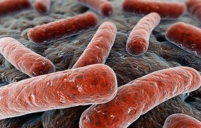 Переносящая заболевание палочка вируса