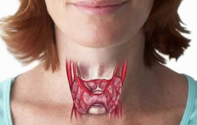 Правильное размещение щитовидки у женщины