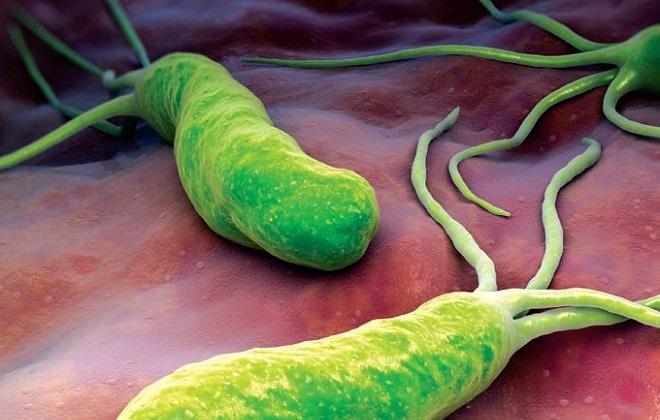 Зеленые бактерии приводящие к проблем с желудком