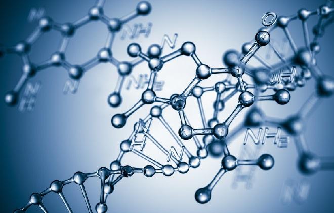 Отцовское ДНК