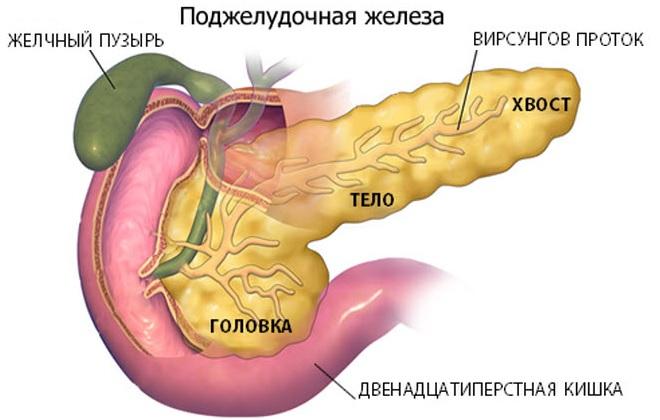 Анализ который показывает общее состояние поджелудочной железы