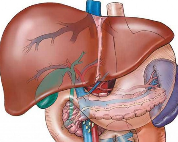 Органы вырабатывающие онкомаркеры