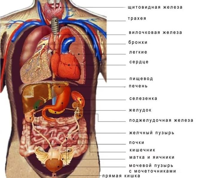 Разновидности онкомаркеров по внутренним органам
