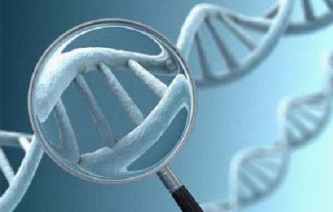 Результат анализа на генетические тромбофилии