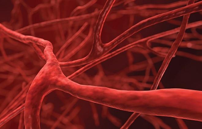 Сосуды заполненные кровью