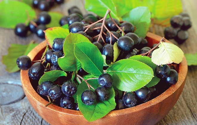 Свежие плоды черноплодной рябины