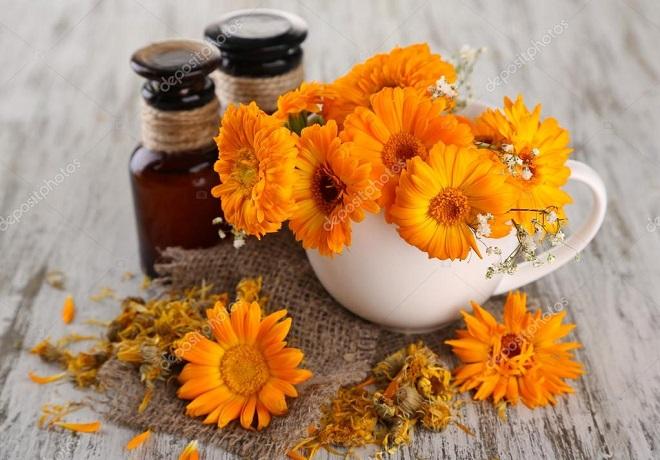 Цветки календулы обыкновенной