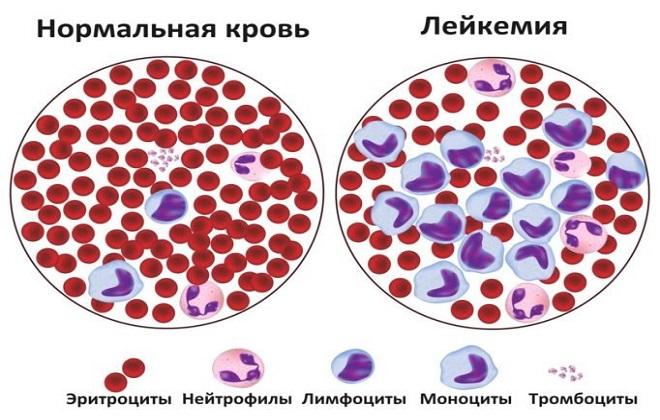 Красные и фиолетовые точки в кружке