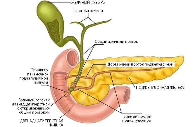 Как определить панкреатит: анализ крови, показатели, хронический, острый