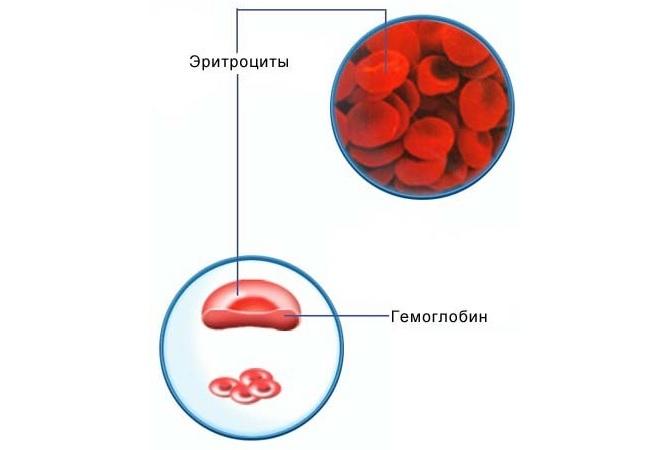 Выделение гемоглобина с эритроцита