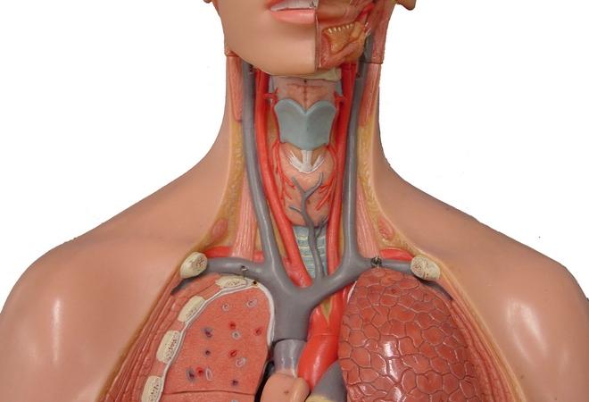 Болезни артерий