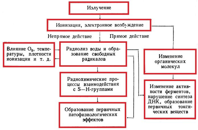 Схема патогенеза лучевой болезни