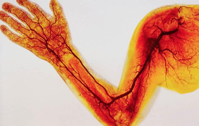Периферические артерии