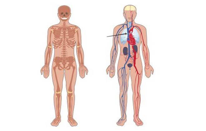 Система верхней полой вены