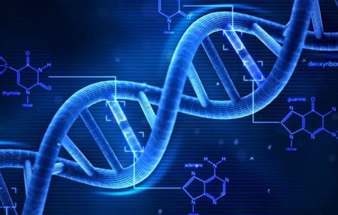 Целостность ДНК